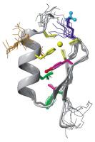 Structure du domaine en doigt de zinc de la protéine NEMO