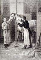 Production de sérum antidiphtérique aux écuries de Marne la Coquette v. 1895.