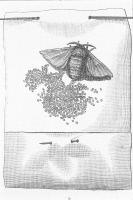 Méthode de grainage cellulaire sur la ponte des papillons femelles