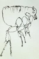 Dessin d'une puce par Paul-Louis Simond vers 1898