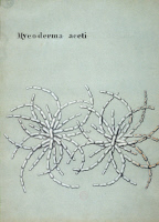 Mycoderma aceti