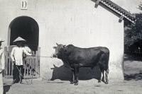 Institut Pasteur de Nha Trang dans les années 1930