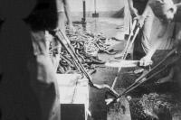 Décapitation de najas pour préparation de sérum anti-venimeux à l'Institut Pasteur de Saïgon vers 1900