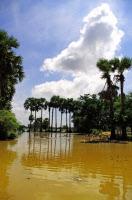 Rizières inondées dans la province de Prey Veng au Cambodge.