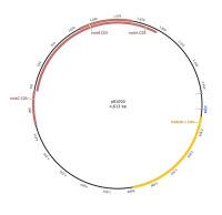 Carte du Plasmide mobilisable pB1000
