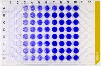 Titrage TCID50 du virus Zika sur cellules Vero.