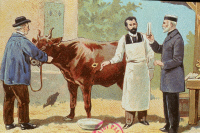 Pasteur et la maladie du charbon