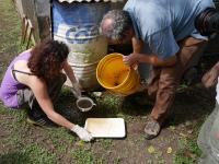 Mission entomologique à Maripasoula, Guyane, en 2016