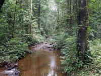Site de Cacao (Guyane).