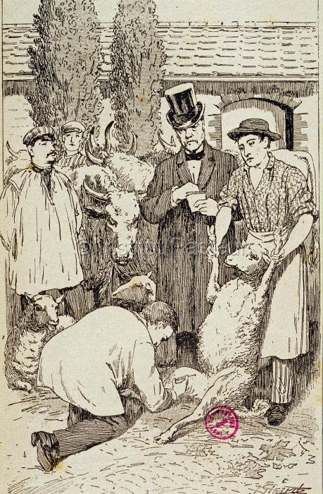 Vaccination anticharbonneuse. Expérience de Pouilly le Fort en 1881.