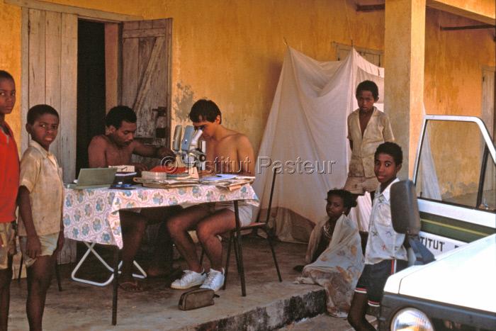 Tri de moustiques, récoltésà Soalala (Madagascar) en 1988