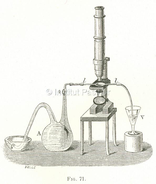 Fermentation butyrique