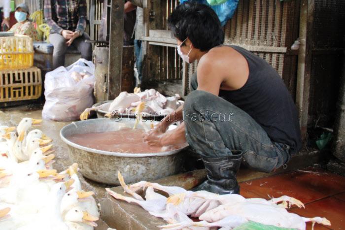 Vente de volailles vivantes au marché d'Orussey à Phnom Penh, Cambodge en 2014.
