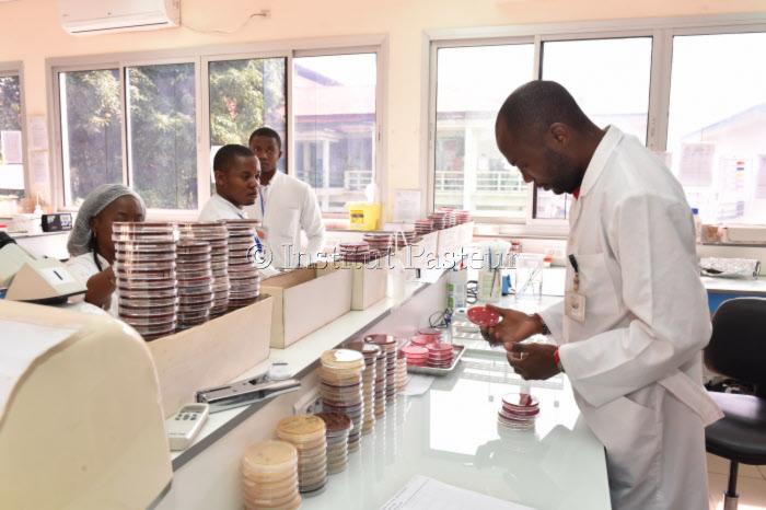 Laboratoire de Bactériologie au Centre Pasteur du Cameroun.