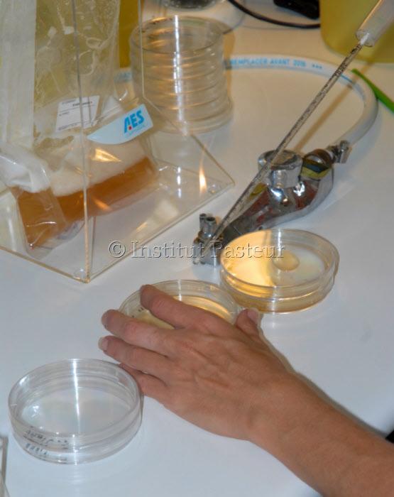 Analyses microbiologiques d'aliments dans le Laboratoire Hygiène et Environnement de l'Institut Pasteur de Nouvelle-Calédonie en 2012.