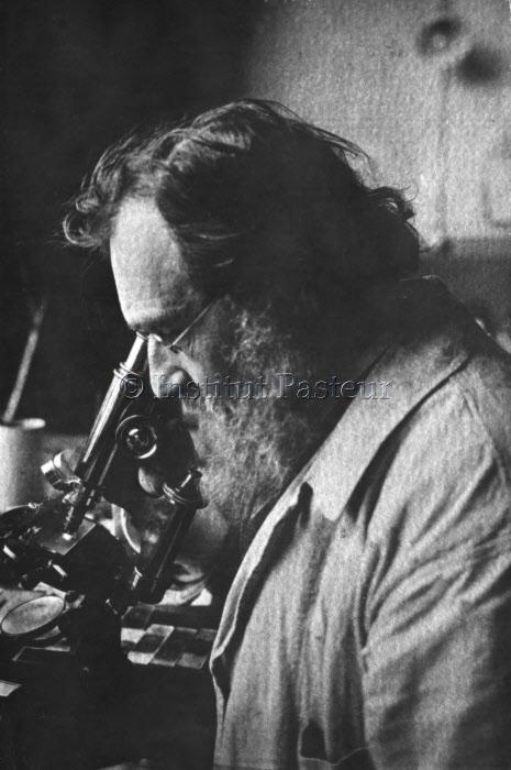 Elie Metchnikoff (1845-1916) au microscope