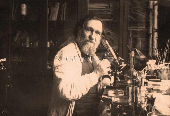 Elie Metchnikoff (1845-1916) devant son microscope vers 1906